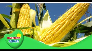 Amazing Plants! What are Producers - More Grades 2-5 Science on the Learning Videos Channel