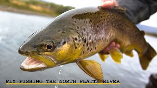 Fly Fishing the Famous Miracle Mile in Wyoming
