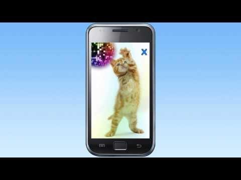 Video of Talking, Dancing Cat.