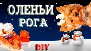 DIY Новогодний олень из собаки
