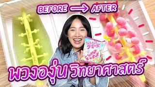 ซอฟรีวิว: ขนมญี่ปุ่น DIY สุดล้ำ!? พวงองุ่นวิทยาศาสตร์!!【Kracie NaruNaru Gummy Tree Grape】