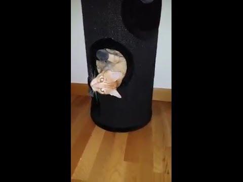 Barril rascador para gatos - Cómpralo en kinevet.com