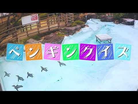 4月25日は世界ペンギンの日『カドリーペンギンクイズ』