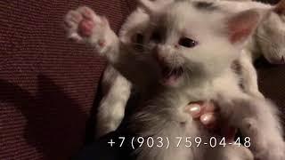 LC273: Котята в добрые руки! Очень красивые котята ищут добрый дом!