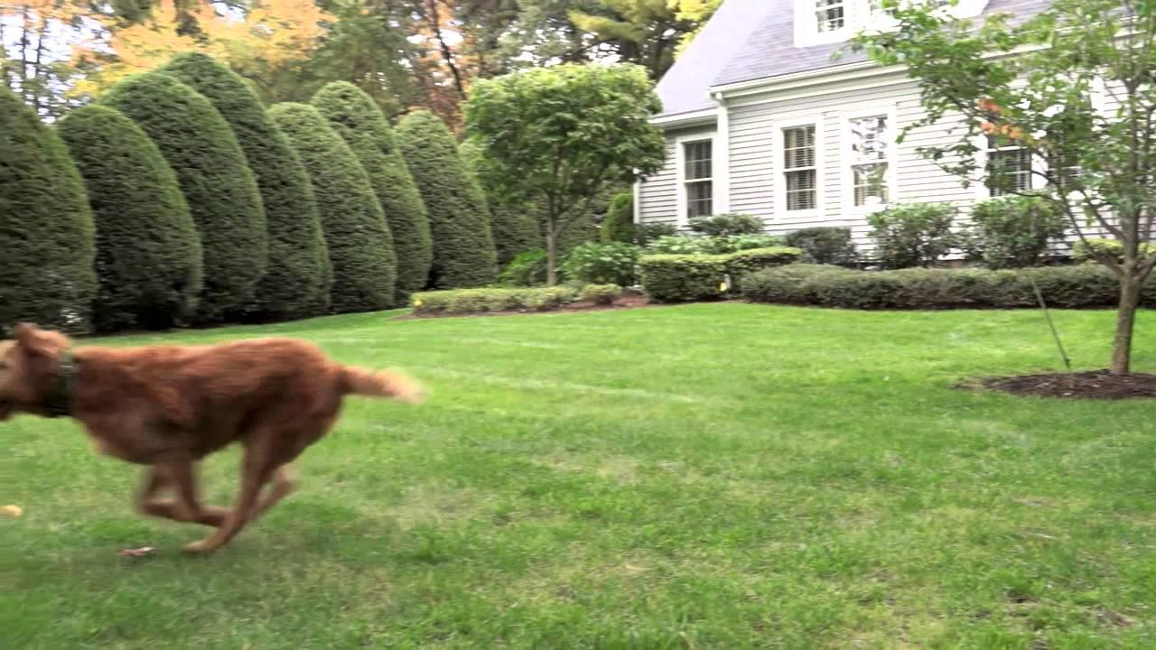 Hidden Dog Fence