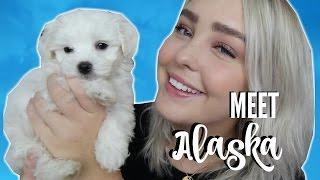MEET MY PUPPY!! | Julia Sofia ♡