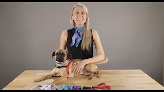 How to Fit the 5 Main Types of Dog Harnesses