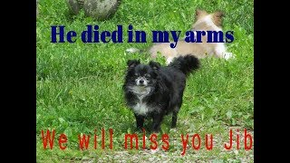 He died in my arms. Burying my best friend & dog Jibs.