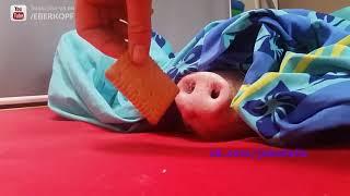 ПРИКОЛЫ №70 подборка приколов Смешное Видео Best Fails ржака жесть ржач угар шутки для взрослых