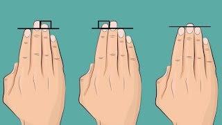 Длина пальцев покажет, насколько ты привлекателен для других людей.