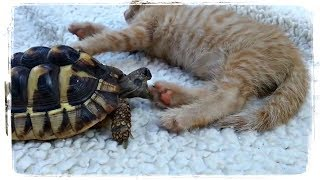 ПРИКОЛЫ С ЖИВОТНЫМИ | FUN WITH ANIMALS #442