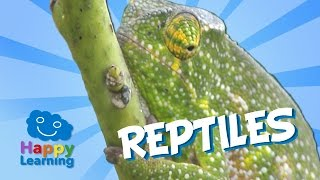 Reptiles | Educational Video for Kids