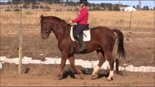 How To Teach A Horse Piaffe Part 5: Developing Half-Steps Part I