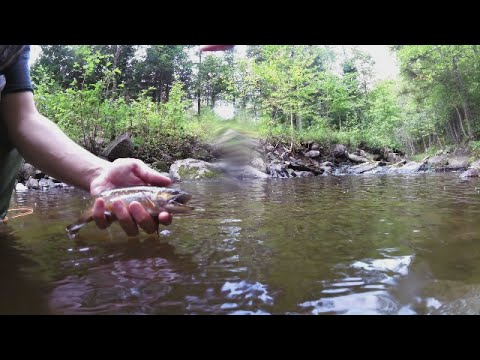 Brook trout fishing in Quebec, CA