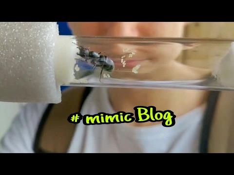 Алергия на паразитов на лице