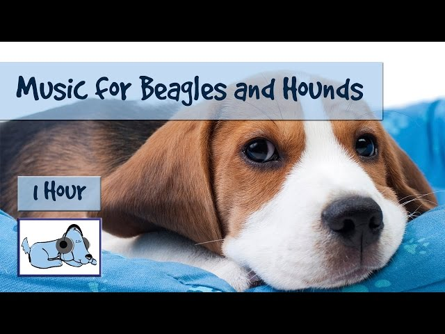 Relaxing-calming-soothing-dog-music