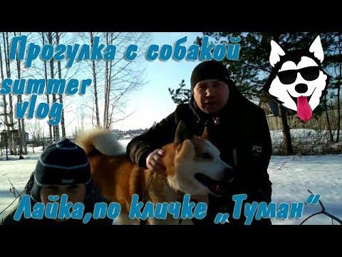 "Прогулка с лайкой, по кличке ""Туман"""
