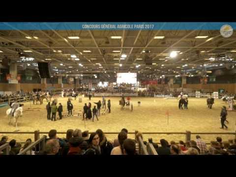 Voir la vidéo : Carrière Équine du 04 mars 2017, partie 2
