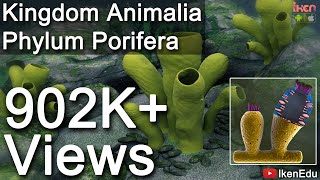 CH05-DIVERSITY IN ANIMAL KINGDOM-PART01-INTRODUCTION – PORIFERA