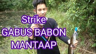 preview picture of video 'Casting dapat GABUS BABON.. Mancing di kolong Mantaaap'
