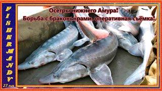 Осетры нижнего Амура, Борьба с браконьерами на Амуре. 1 часть.