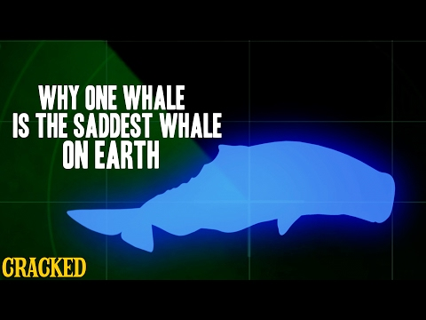 Why One Whale Is The Saddest Whale On Earth