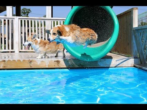 Hundene nyter sommeren mer enn deg