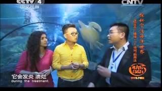 """20140807 快乐汉语 揭秘宁波海洋世界 语言点:""""值得 + 一 + 动词""""的用法"""