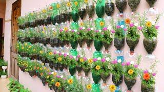 Amazing Vertical Garden Using Plastic Bottles, Portulaca (Moss Rose) Garden On Wall
