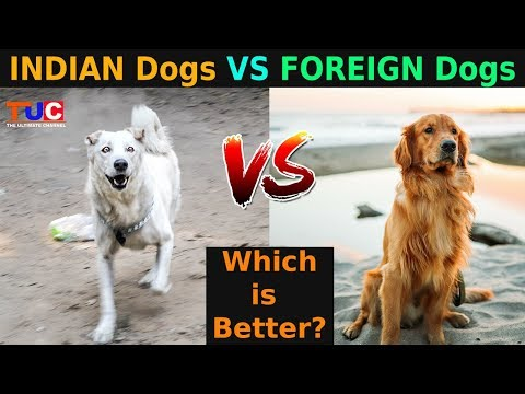 INDIAN Dogs VS FOREIGN Dogs: Which Is Better?? : The Ultimate Channel