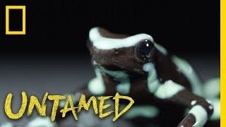 That Frog is...Poison | Untamed