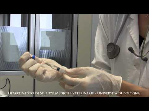 Clistere per chiarificazione di intestini da parassiti