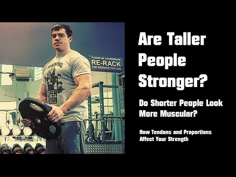 Are Taller People Stronger? How Limb Proportions and Tendons Affect Strength