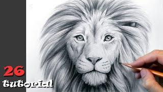 Как нарисовать льва карандашом. Поэтапный туториал.