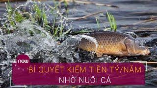 Kiếm chục tỷ nhờ bí quyết nuôi cá đặc biệt | VTC Now