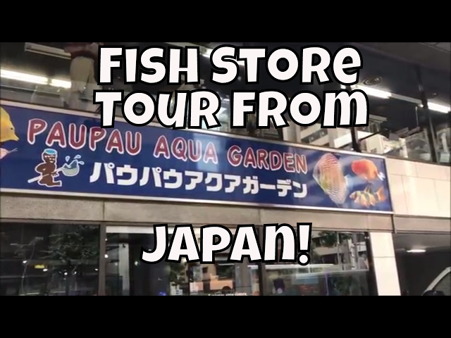 Japanese Fish Store Tour PauPau Ginza Japanese Fish Shop tour in Japan ADA Store