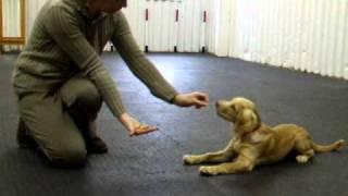 Puppy Foundation Agility