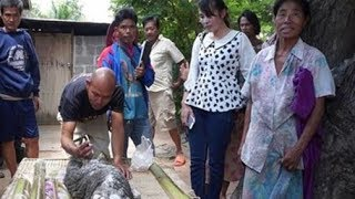 Chuyện lạ có thật: cá sấu mình trâu gây xôn xao ở Thái Lan