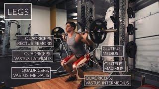 Exercise Anatomy: Legs Workout   Pietro Boselli