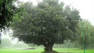Purana Qila on rainy day