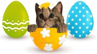 Мой милый КОТЕНОК Спрятался в ЯЙЦО Играем Весело с мимишным котиком Мультик игра про котят для детей