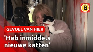 Vermiste poes Juliette na drie jaar terug bij baasje | Omroep Brabant