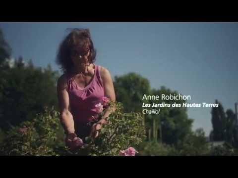 L'Esprit parc national par Anne Robichon - Plantes aromatiques et à parfums