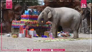 'Trompita' the elephant celebrates her 59th birthday in Guatemala