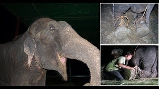 50 years a Slave: Raju The Elephant Cried Tears Of Joy After Being FREED