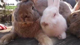 [시골愛산다] 토끼 사육으로 연 매출 1억 원 달성?!_채널A_신대동여지도 75회