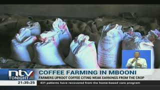 A section of coffee farmers in Mbooni are uprooting coffee trees