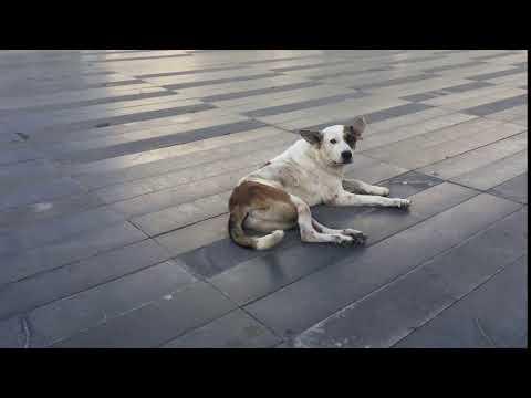 Dog in Turkey. Собака в Турции.