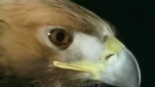 人生的雄鷹