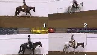 4H Horse Judging-Western Pleasure